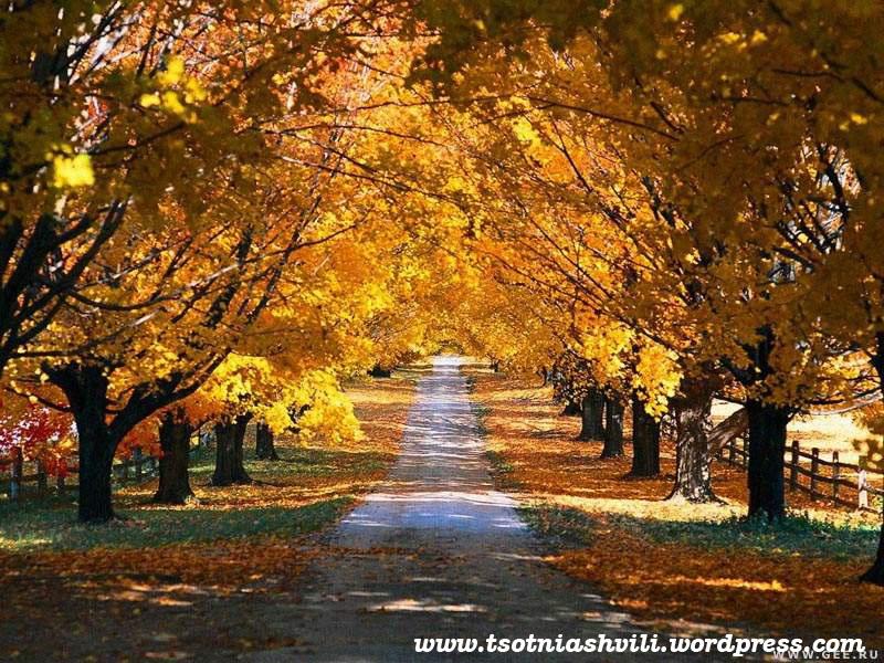 Fall Tree Road Desktop Backgrounds